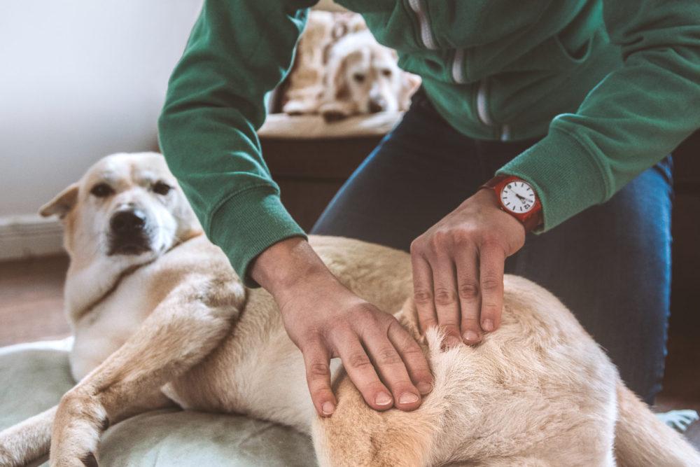Dog Massage_ Range of motion_Canine Sports Massage_Animal Physiotherapy