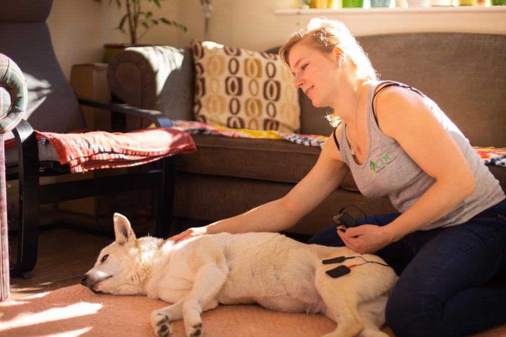 Electrostimulation_Canine Sports Massage_Acupressure_Animal Physiotherapy_Animal Rehabilitation
