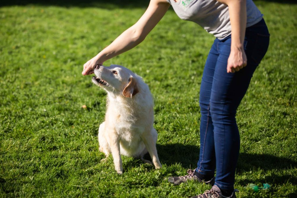 Joint Mobilization and stretch_Canine Sports Massage__Animal Physiotherapy_Dog and cat Rehabilitation